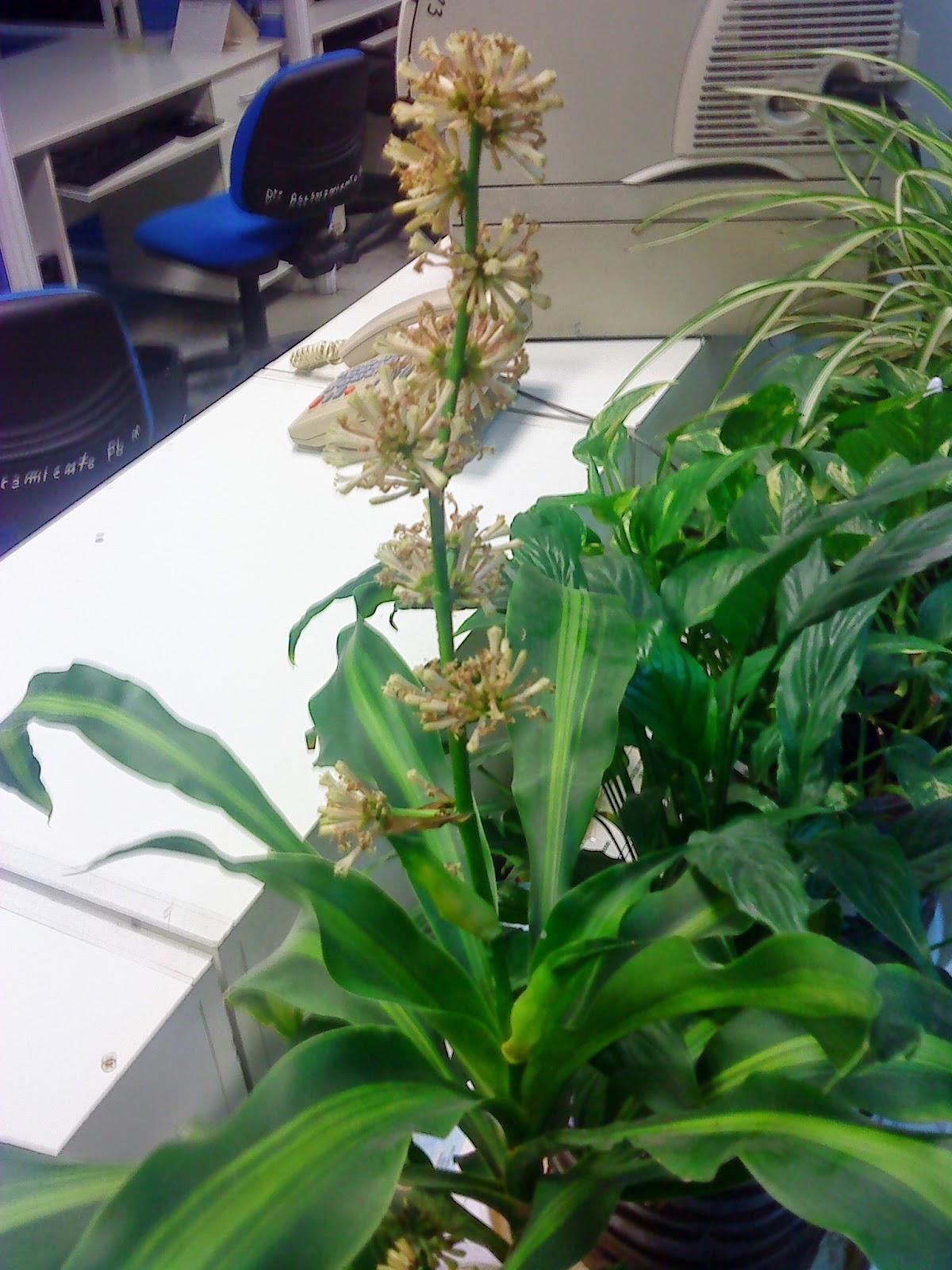 Fitorremediaci N Del Aire Interior 10 Plantas Purificadoras De  ~ Plantas Que Limpian El Ambiente