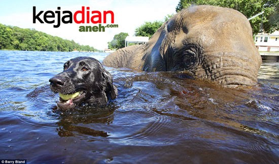 Bubbles elephant-Bella Dog
