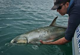 Manipulación de peces en la Captura y Suelta