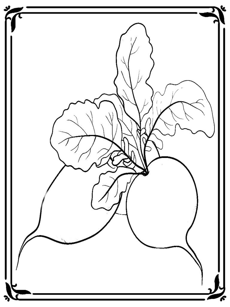 Coloring pages for the enormous turnip realistic for Turnip coloring page