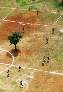 Árvore em campo de Futebol