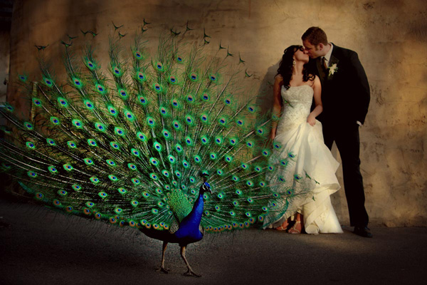 Peacock Wedding Decorations