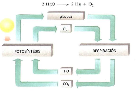 Ciclo biologico del oxigeno