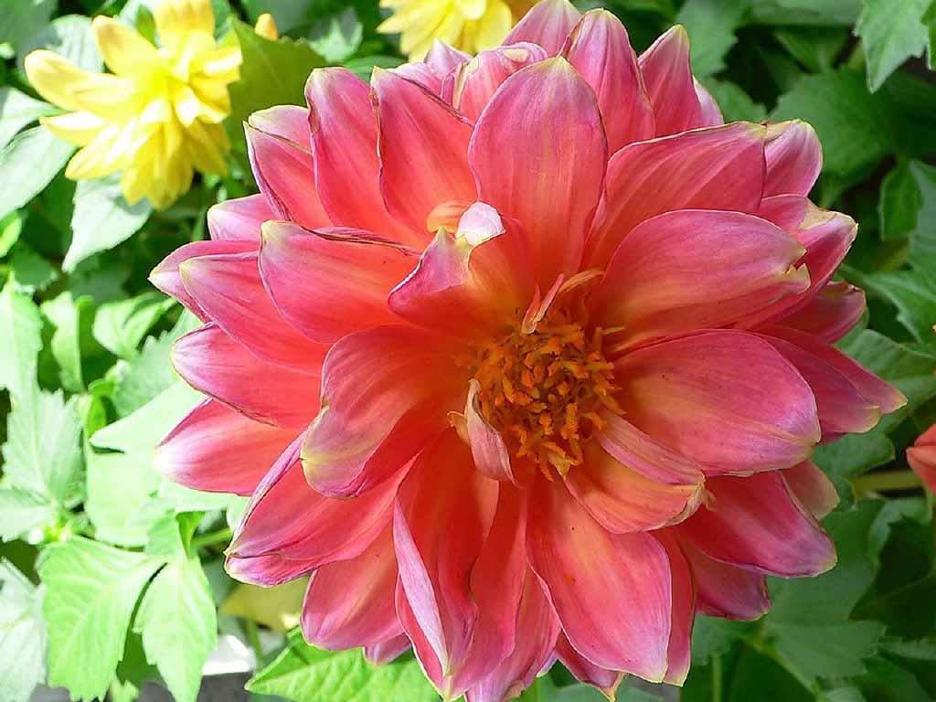 beautiful flower nature scenery wallpapers - Beautiful flowers bloom