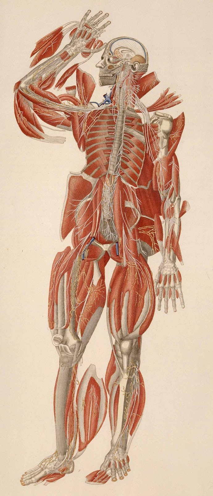 Inside & Outside: Anatomical Forces in Figure Drawing | Drawing Seeing