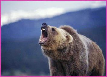 Notizie curiose dal mondo i dieci animali piu forti del for Cabina di montagna grande orso