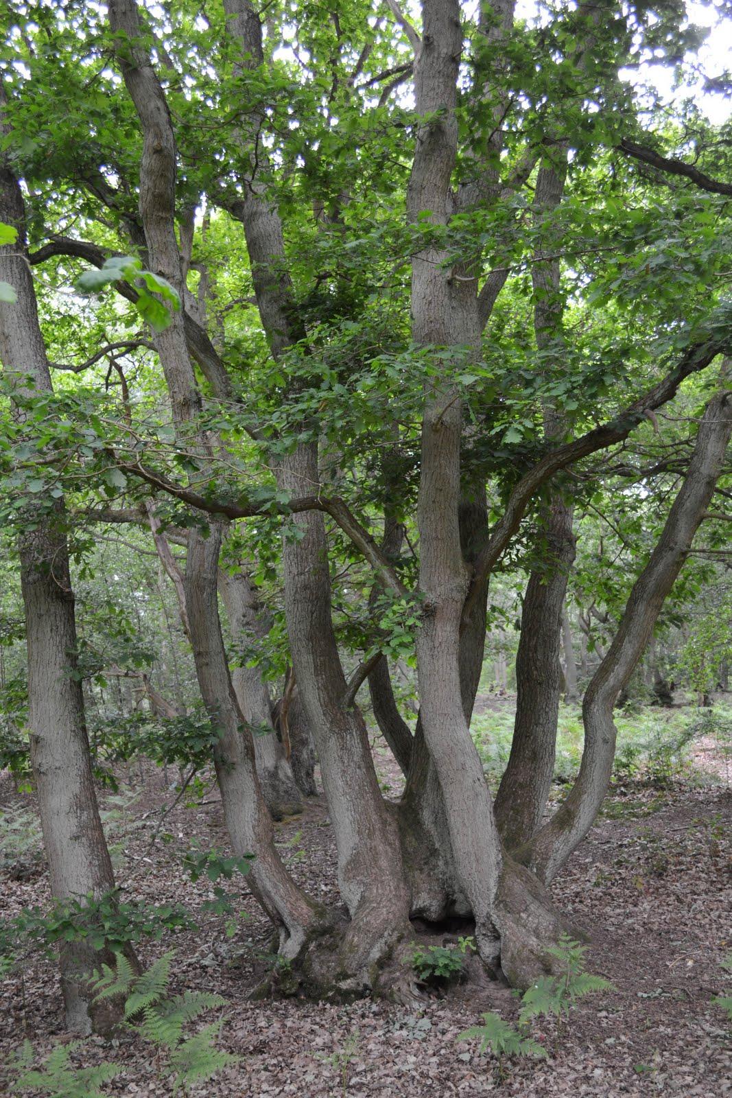 Walks among flowers: buckinghamshire bedfordshire border