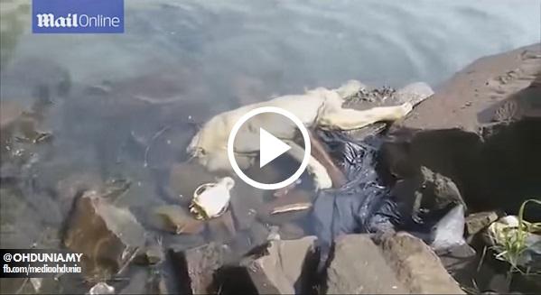 Video: Bangkai makhluk aneh dikenali sebagai 'CHUPACABRA' ditemui