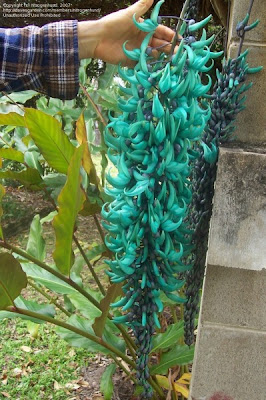 The Jade Vine