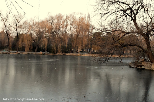 THE SHORT WINTER STROLL AT BEIJING ZOO