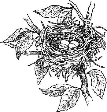 The Ceder Nest