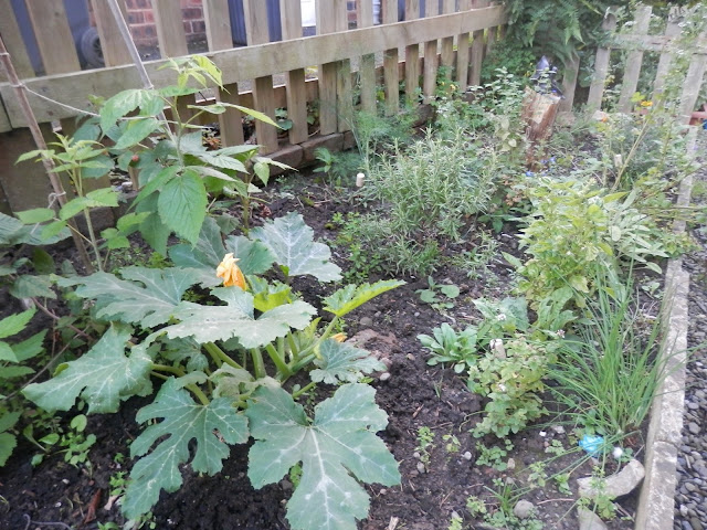 Rasperries, courgette and herbs. Garden, September 2015.  secondhandsusie.blogpsot.co.uk #autumngarden #ukgarden #growyourown #ukblogger