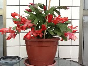 Flor de Maio!!