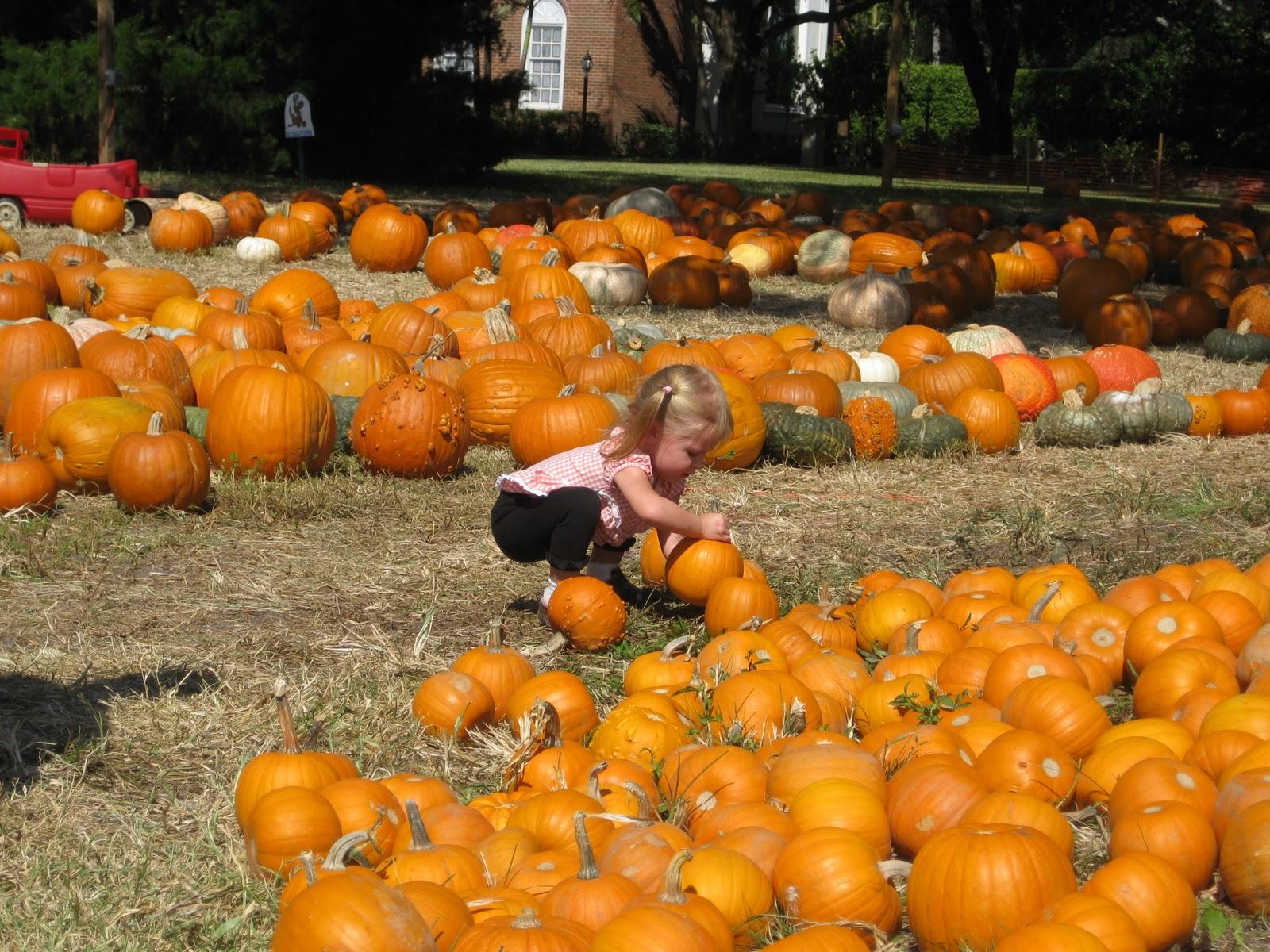 Pumpkin Patches Macaroni Kid