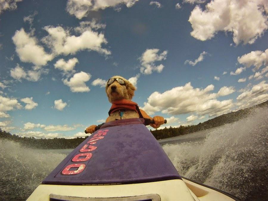 perro sobre moto de agua