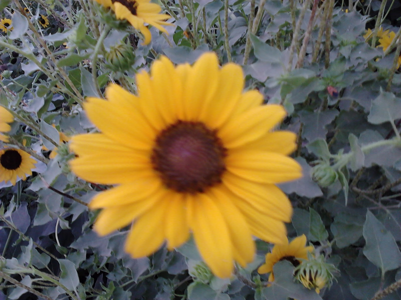 sunflower buddhist singles While the word has no single, fixed meaning,  yoga tattoos hand tattoos tatoos buddha tattoo design tattoo tree buddhist tattoos sunflower tattoos meaningful .
