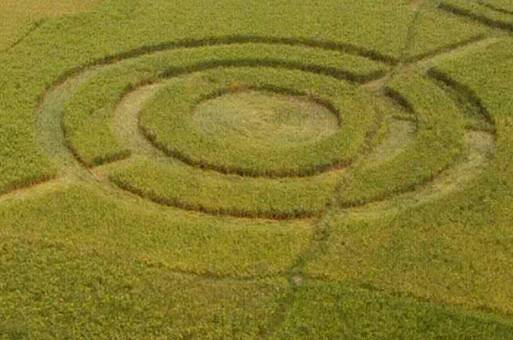 Crop Circle In Cikarang, Bekasi - the facemash post