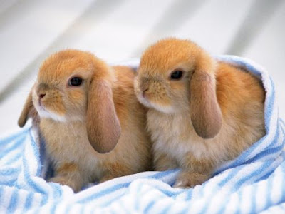 Beautiful Rabbit Wallpapers