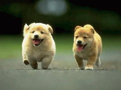 Cún con dễ thương đáng yêu