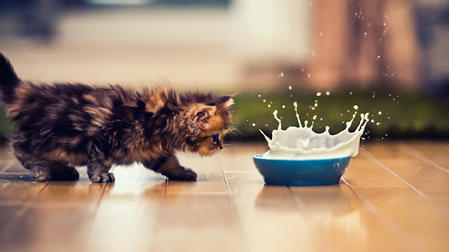 cute kitty and milk splash high-speed photo