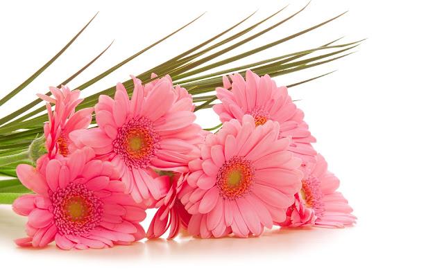 Flores Rosadas Hermosas Fotos de Flores - Imágenes de Flores en HD