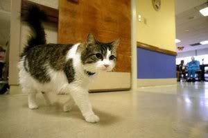 2 Kucing Misterius di Dunia Yang Fenomenal - http://info-infounik.blogspot.com