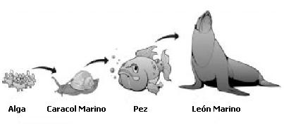Aula365 La cadena alimentaria - imagenes de la cadena alimenticia de los animales