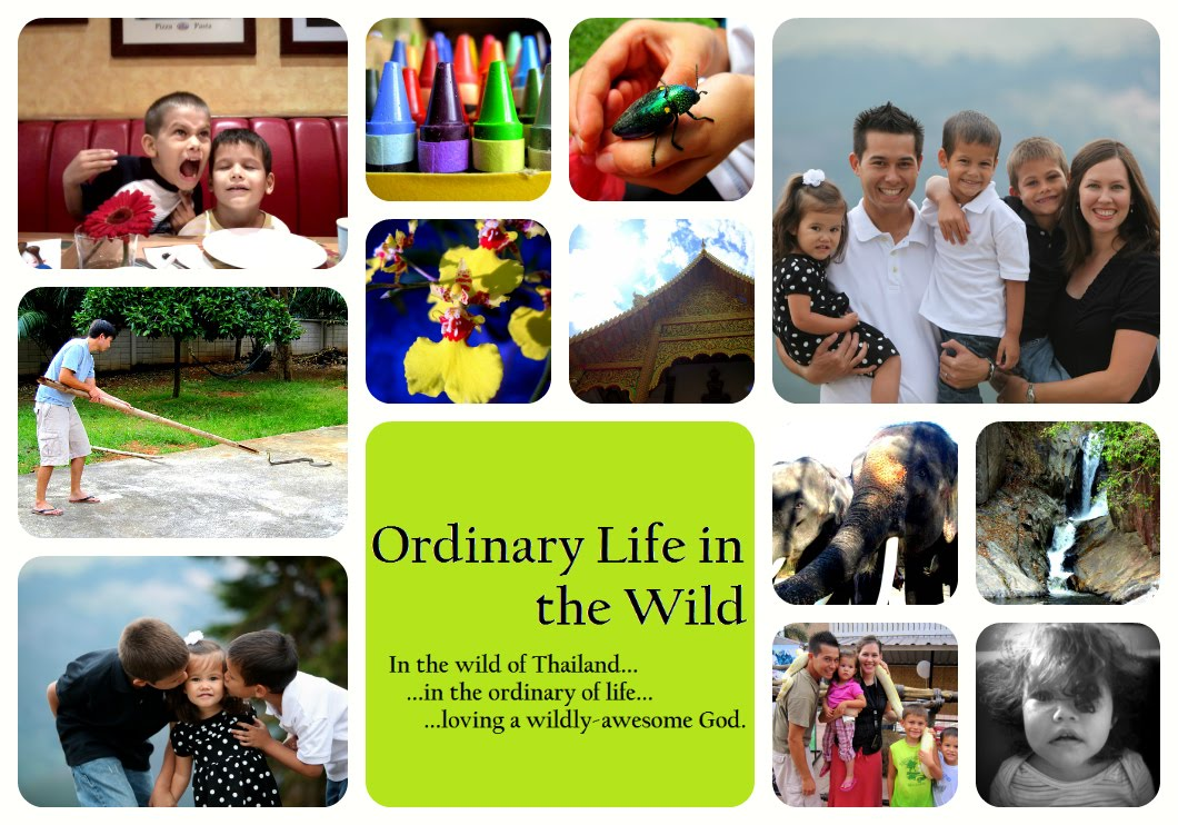 Ordinary Life in the Wild