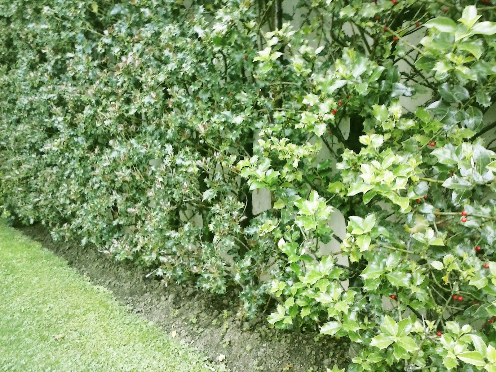 Talaia paisaje y medio ambiente setos vivos con especies for Setos para jardin