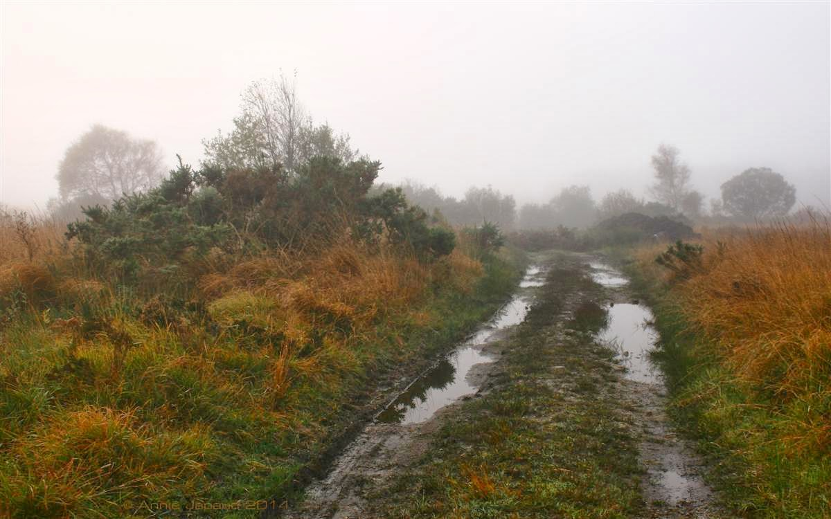 small road with puddles leading into the fog, rusty grass on the sides