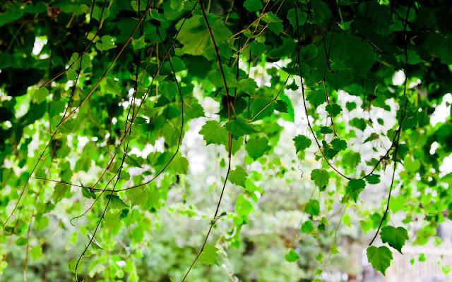 Hình nền khu vườn mùa xuân - ảnh 13