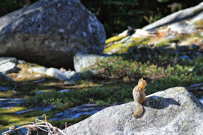 Chipmunks We Encountered on Our Climb to Colchuck Lake