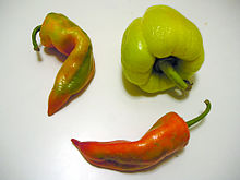 Paprika Fruits Three Photo by Joy From wikimedia