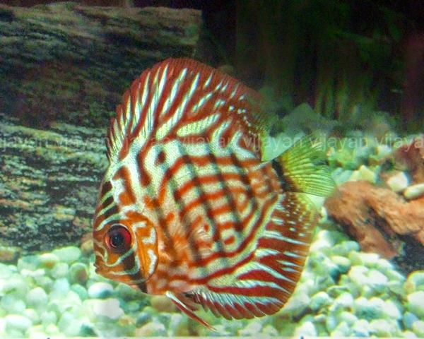 Aquarium Info Just Another Stinglifestyle Sites Site