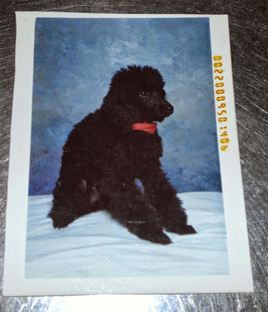 Rasmus, älskade hund. Du gjorde ett avtryck som jag aldrig glömmer.