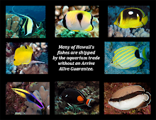 SEND A POSTCARD TO HAWAII'S GOVERNOR TO SAVE THE FISHES