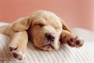 Mùi bắp rang bơ có trên bàn chân cún cưng