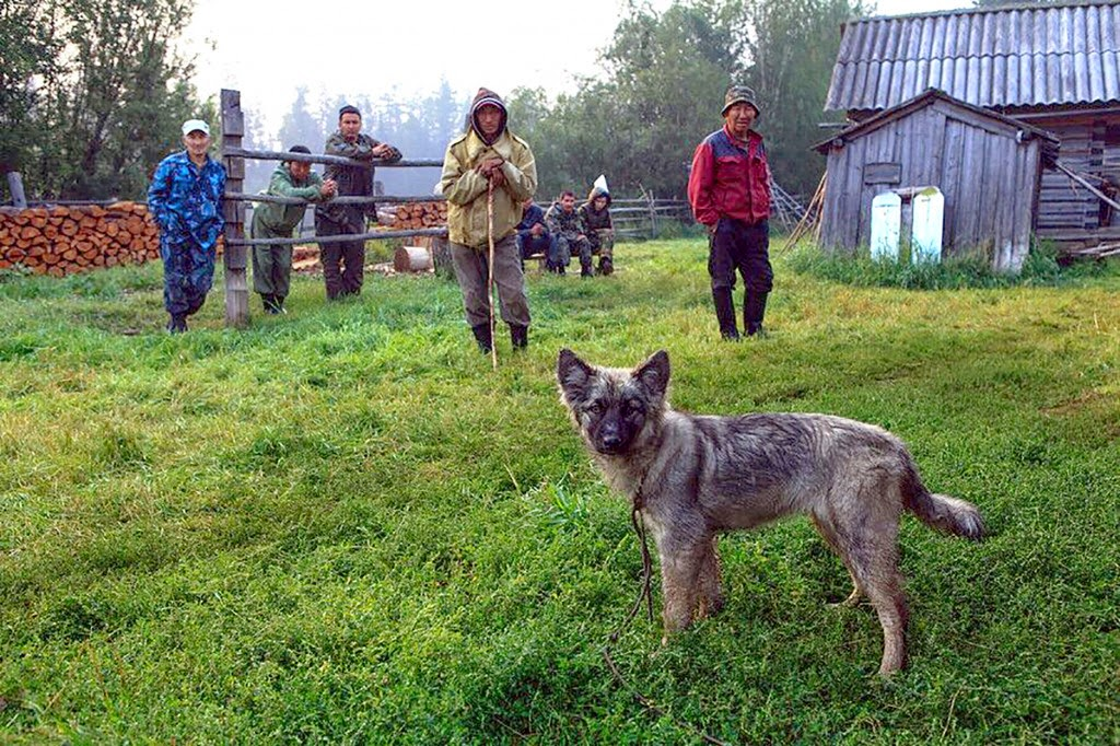 Little girl survives 11 days in Siberian wilderness, saved by her dog (VIDEO)