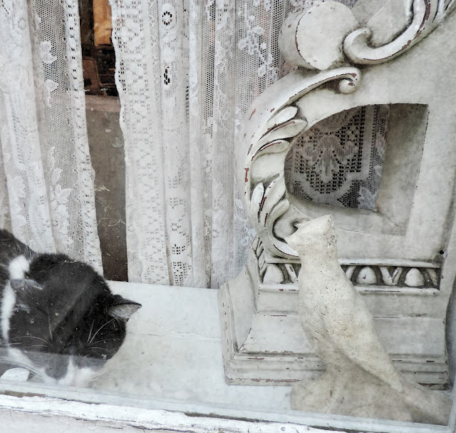 Savannah cat shabby