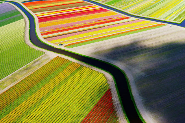 1. Foto Bunga Tulip di Voorhout Belanda