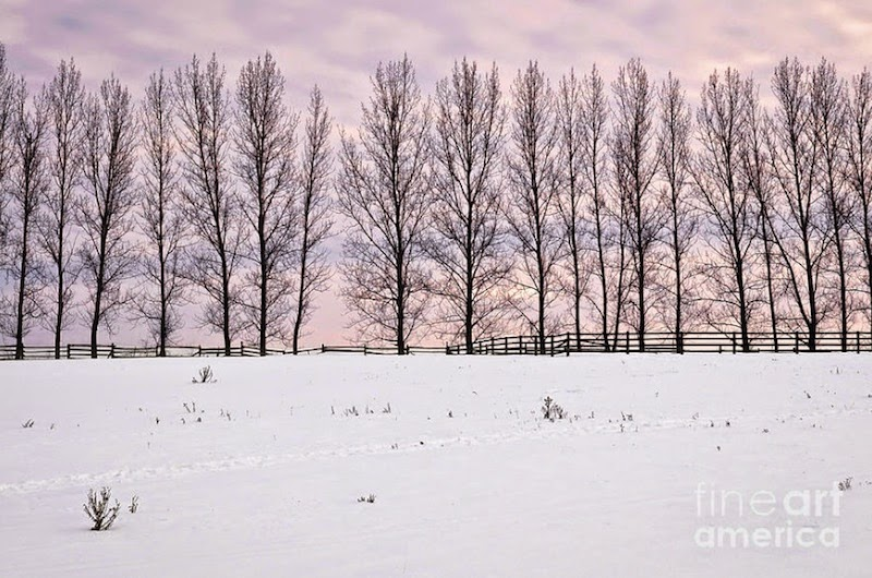 1. Rural Winter Landscape  - 15 Of The World's Most Gorgeous Winter Landscapes