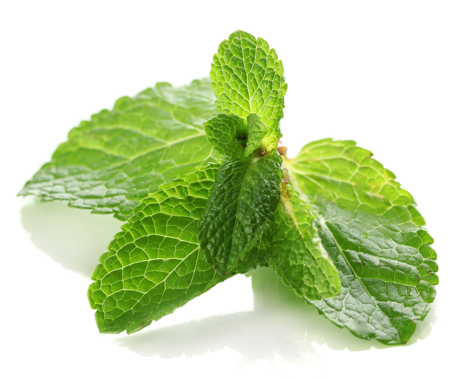 Http Healthyplate5 Blogspot Com 2013 04 Medicinal Uses Of Mint Html