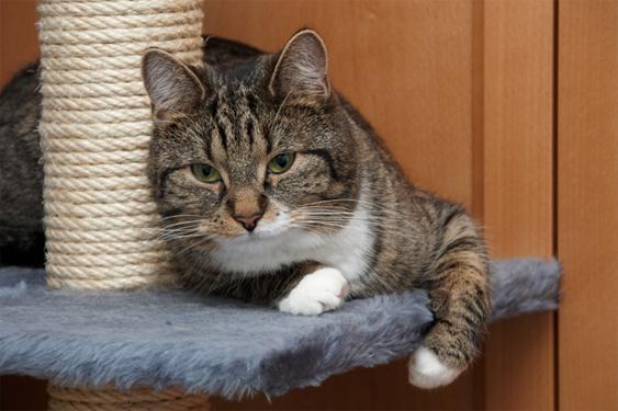 Kotikissa on yhteisnimitys kaikille rekisteröimättömille kissoille.