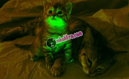 kucing glow in the dark