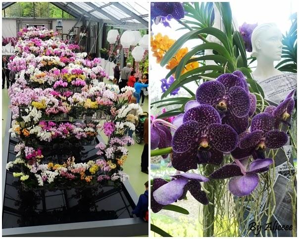 orhidee-keukenhof