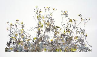 Richard Müller: Farbstift auf Papier Plantes poussant devant l'atelier 3