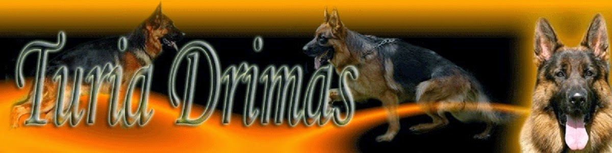 German Shepherd Von Turia Drimas / Pastores Alemanes Von Turia Drimas