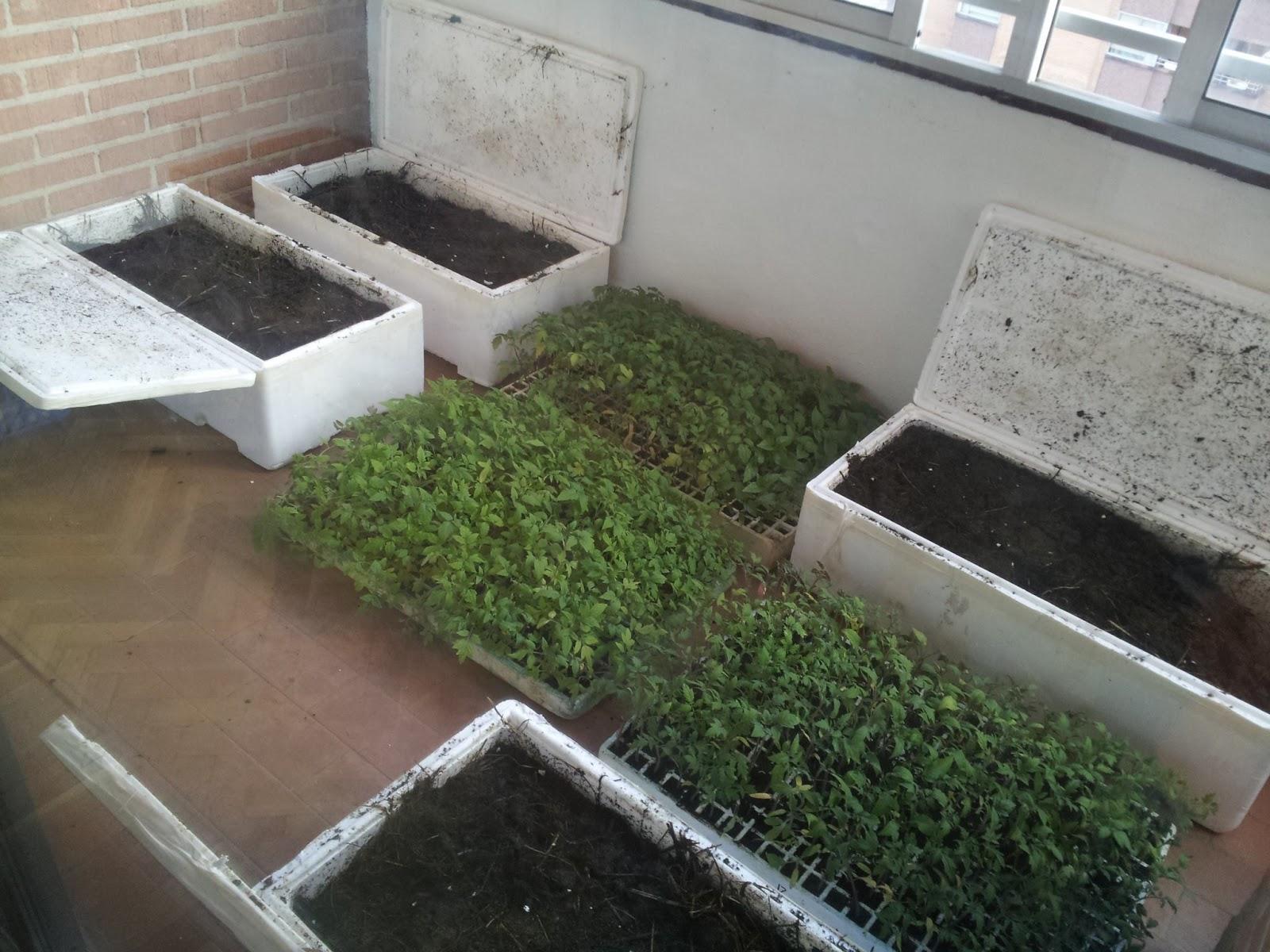 La regadera verde montando pl stico invernadero - Invernadero casero terraza ...
