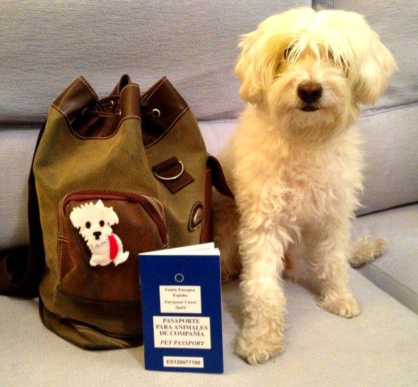 Documentos para viajar con un perro a Estados Unidos