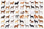 with different . dog breeds kims accross